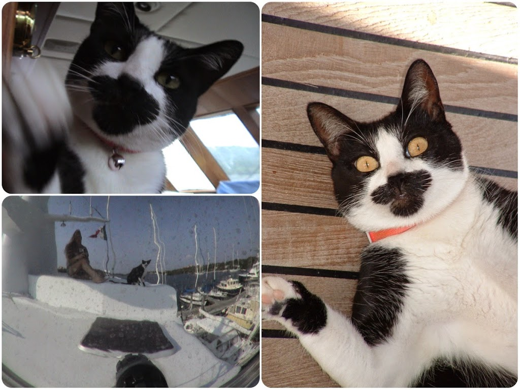 travel cat on the yacht in Isla Mujeres