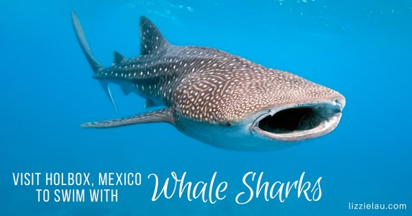 Visit Holbox, Mexico To Swim With Whale Sharks