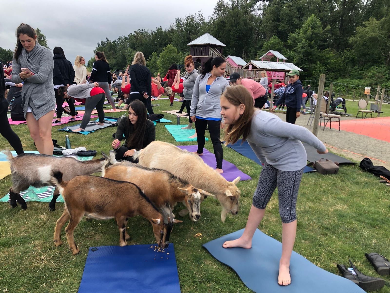 Goat Yoga World Record Attempt