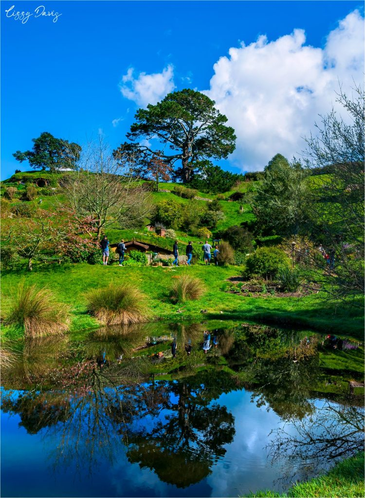 Reflection pond with the tree on top of Bag End at Hobbiton.