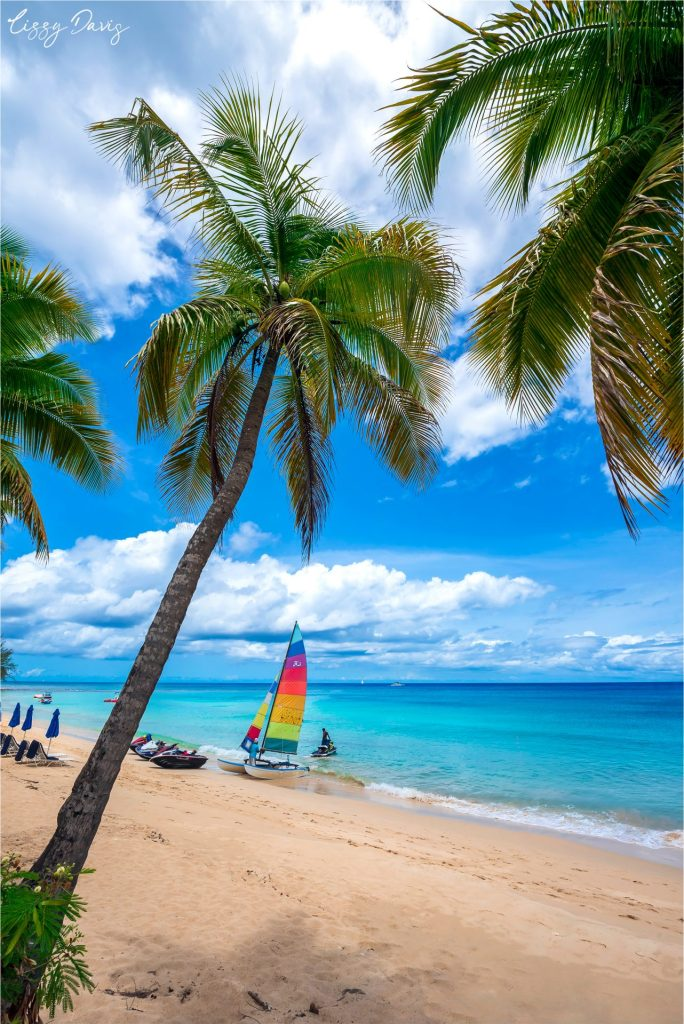 Palm trees and sailboats in the tropical paradise island of Barbados.