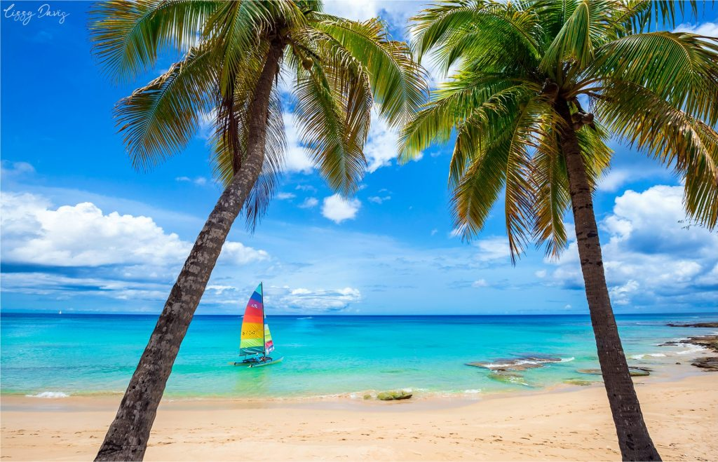 Postcard perfect view of a sailboat between two palm trees on the Caribbean Sea.