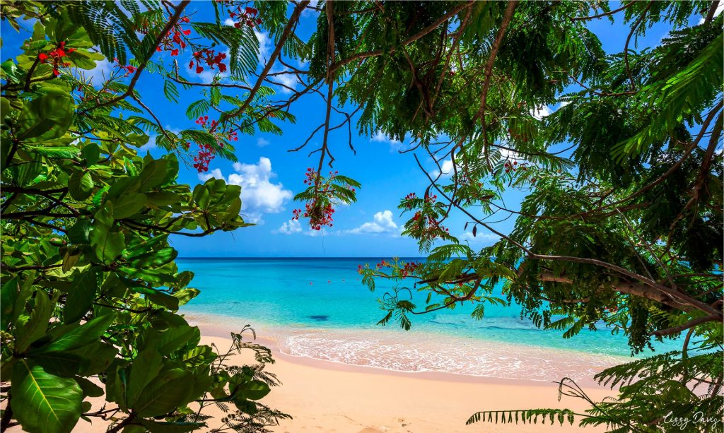 Tropical paradise found in the Caribbean Island of Barbados.