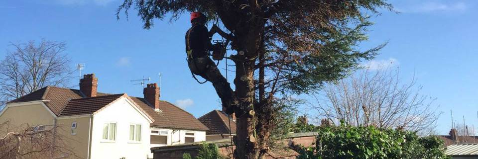 We're fully qualified & dedicated arborists
