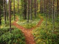 crossroads-forest-3448364