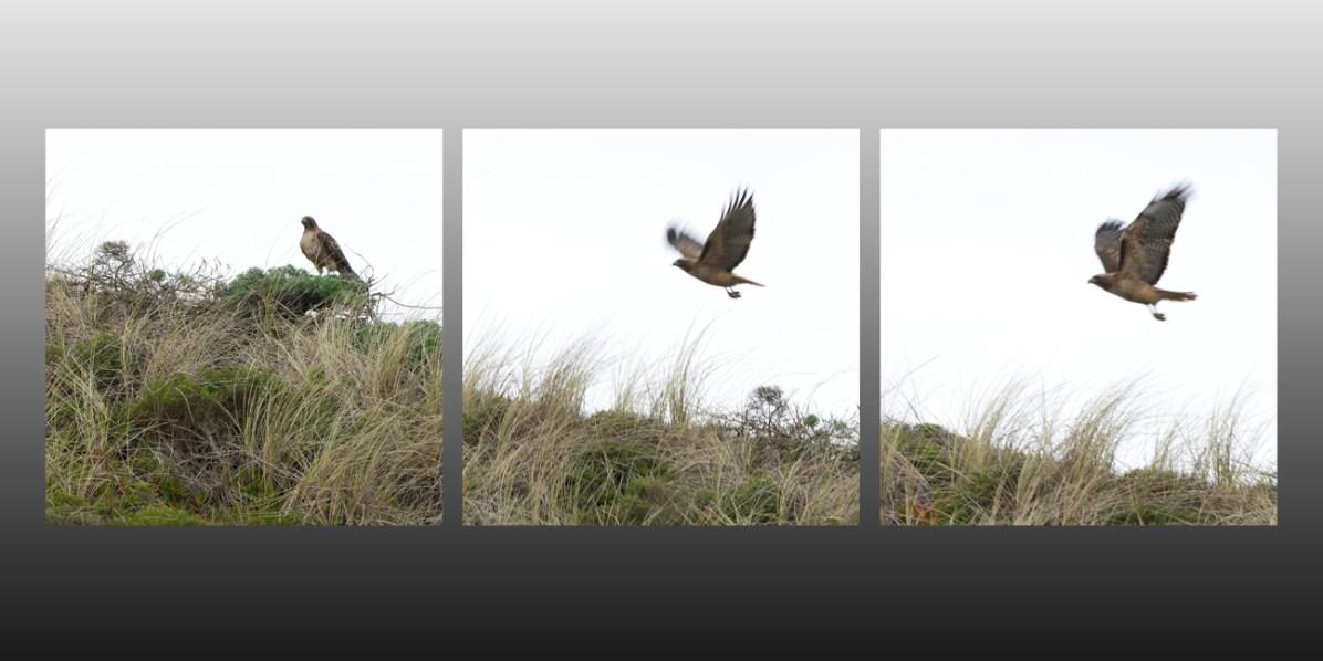 hawk triptych email