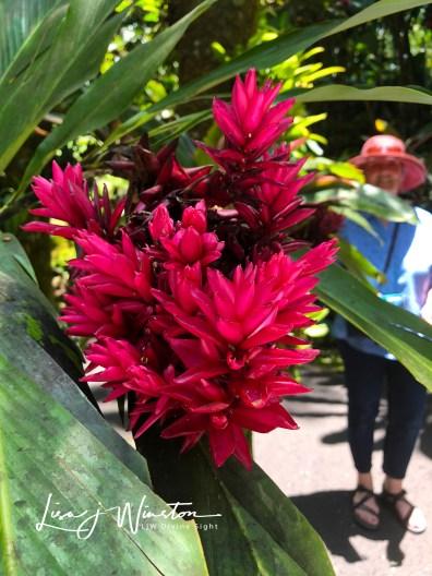 06 botanic gardens