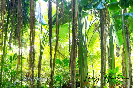 28 hikey jungle botanical garden