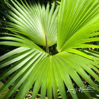 44 new palm fronds