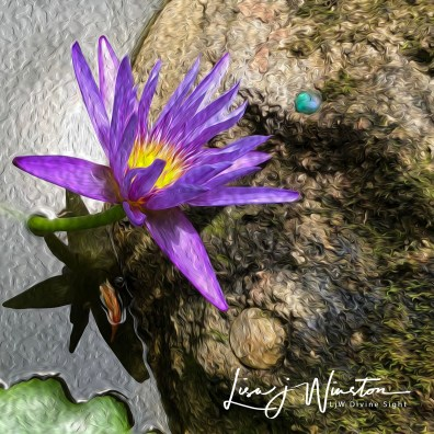img 0560water lily
