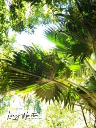 img 1607hi key palms