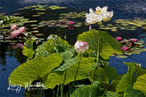 lotuslilies1823wtrmk