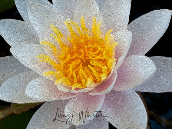 white lily wtrmk