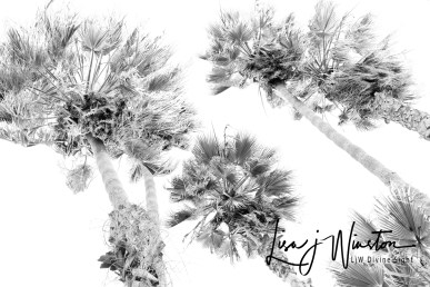 hikey palms 02341bw
