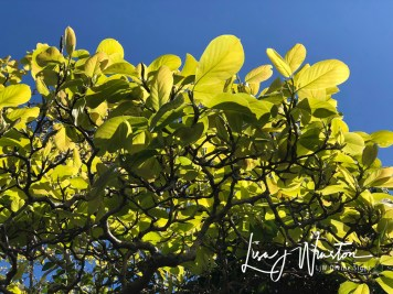 16 heart chakra green leaves 3528