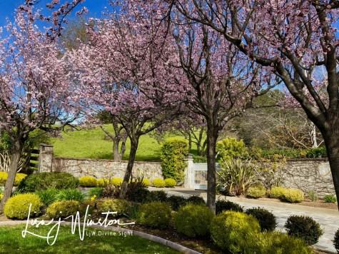 17 spring blossoms 3621