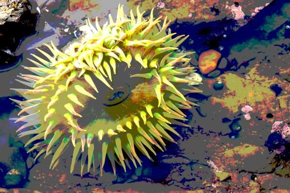 dsc06952 anemone post