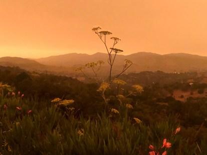 Sept 9 Orange Fire Sky