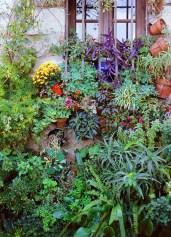 French Window Garden