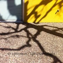 Bonair Shadow_1976