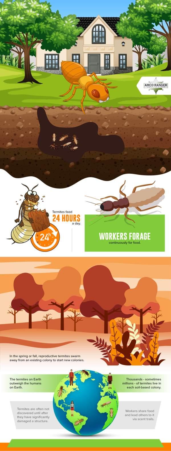 Amco Ranger Termite Infographic