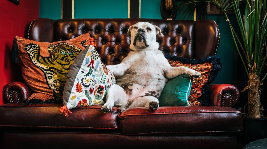 Doggo on Couch