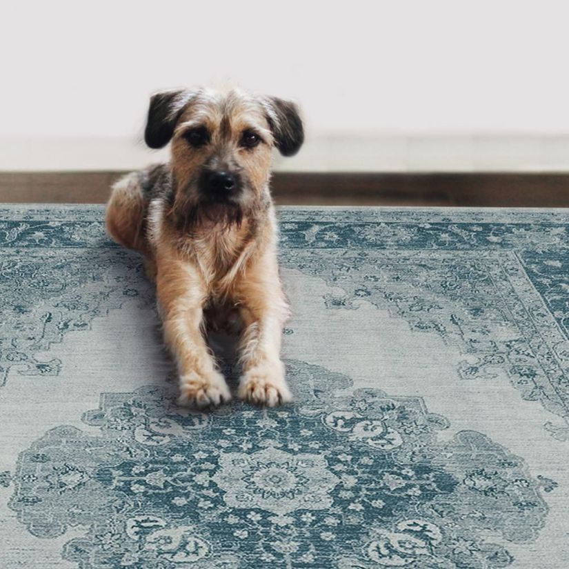 pet friendly rugs