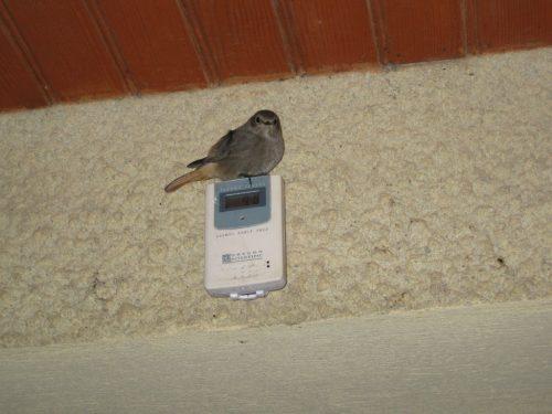 Little bird!