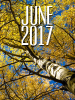 From the Desk of the Lay Director – June 2017