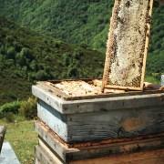 la amarga miel cruda llaria brezo primavera