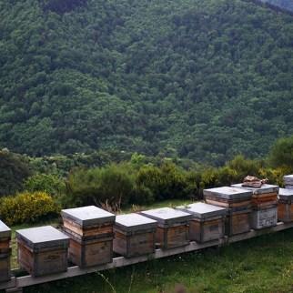 colmenar montaña anguiano miel llaria