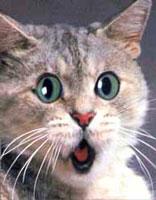 https://i2.wp.com/lledgerock.com/shocked-cat.jpg?quality=60&strip=all