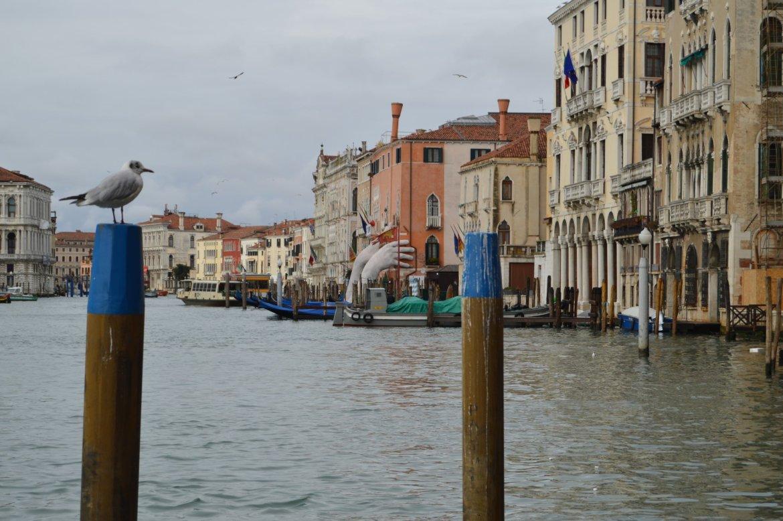 Venecia 2018 - Dia 02- 05