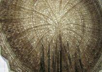 Tree trunk cross-section shawl (Gwynedd Guild)