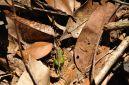 A beautiful grasshopper!
