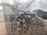 One of the spiders in the museum