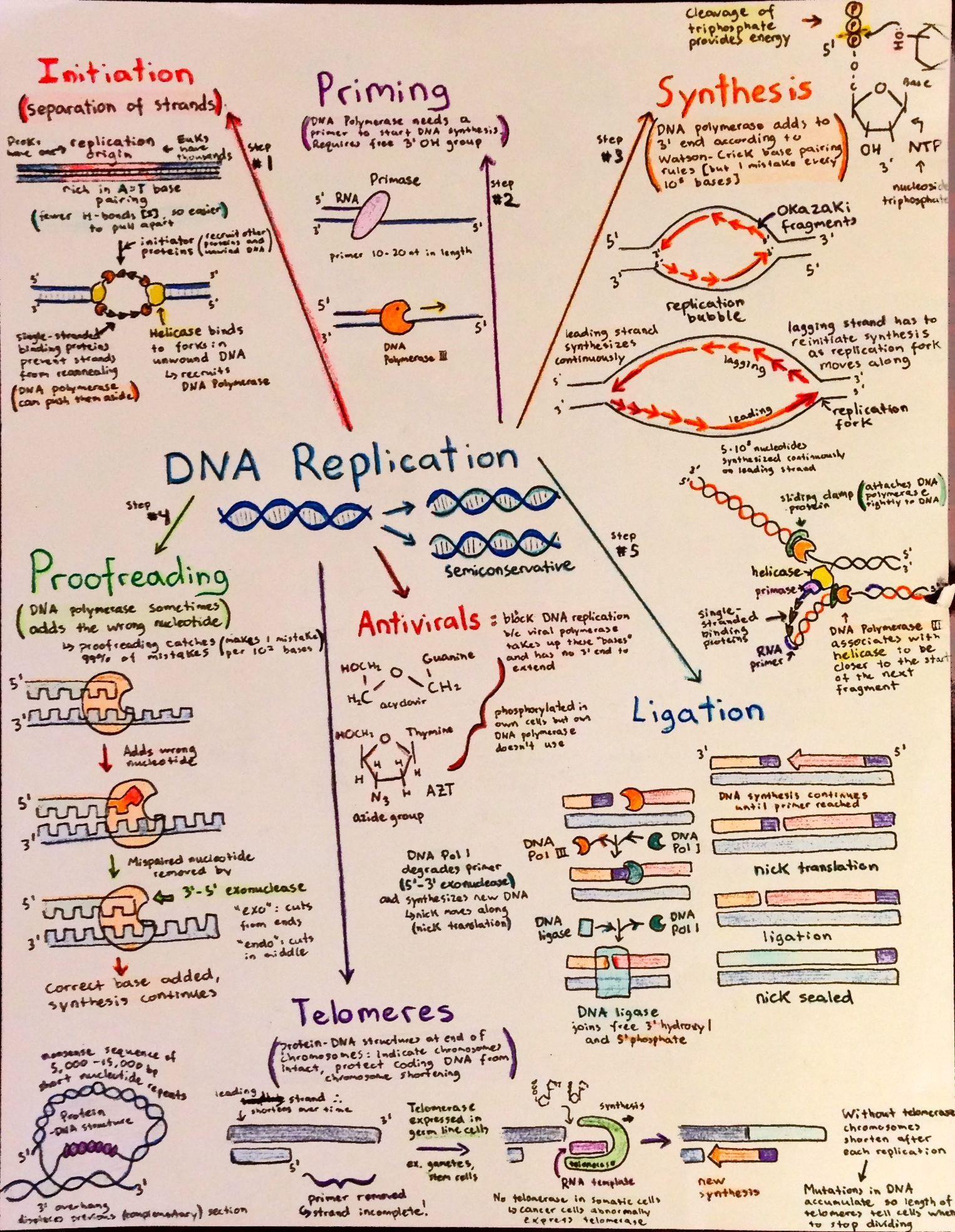 Introductory Biochemistry Flowcharts Love Life And