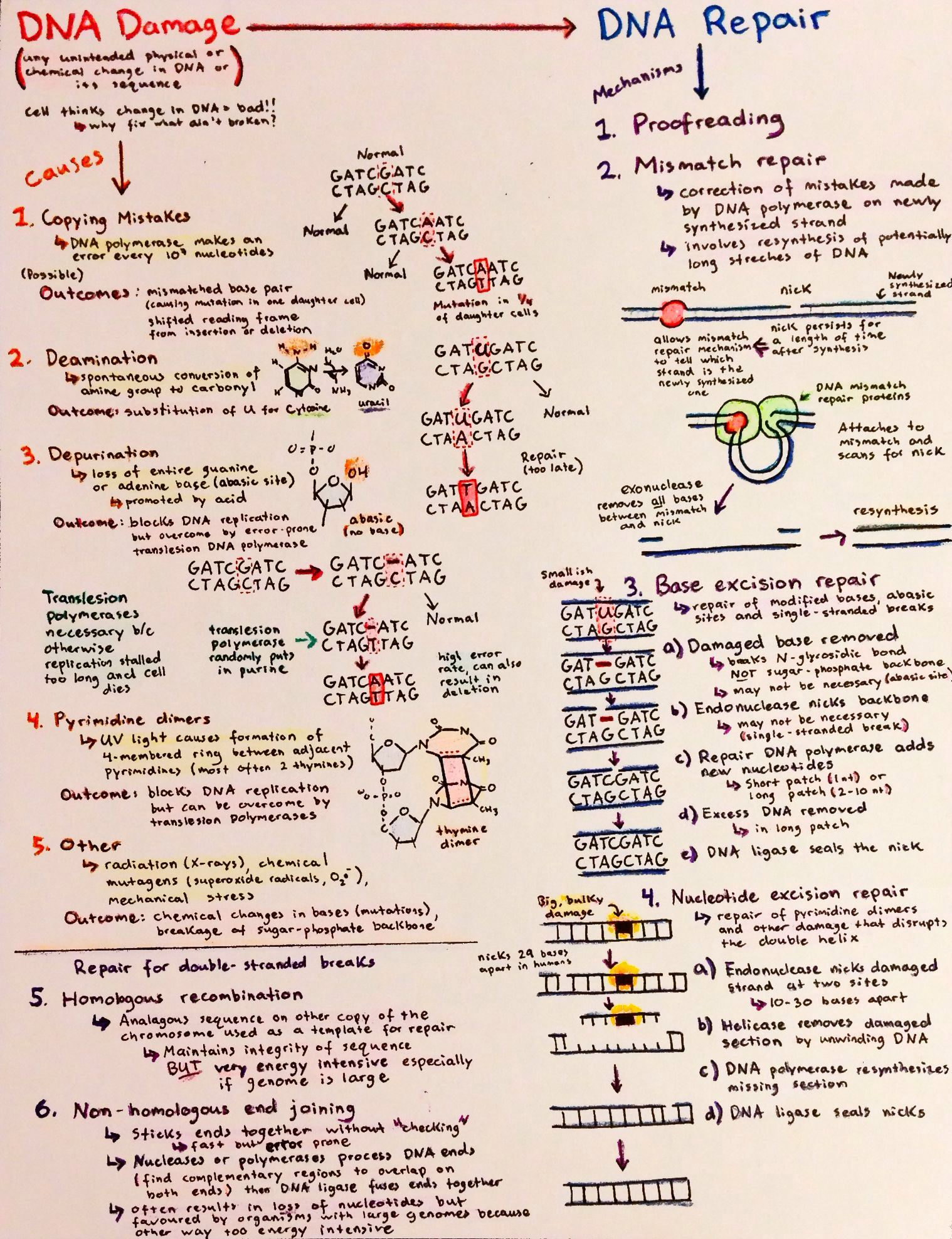 Introductory Biochemistry Flowcharts Love Life And Position Time Graphs
