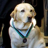 Roselle, the guide dog who saved her blind master in Tower One on 9/11