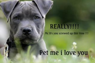 Letter sent to BADRAP in protest to McDonald's commercial mentioning stray pit bulls 22