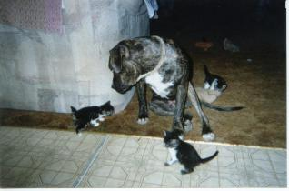 Photo of pit bull surrounded by kittens