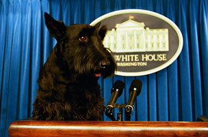 Barney at the Presidential Podium getting ready to make the State of the Biscuit address.