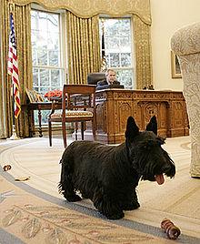 Barney Bush in the Oval Office