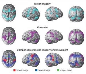 étude cerveau