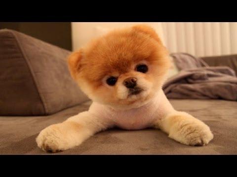 10 Funniest Dog Videos