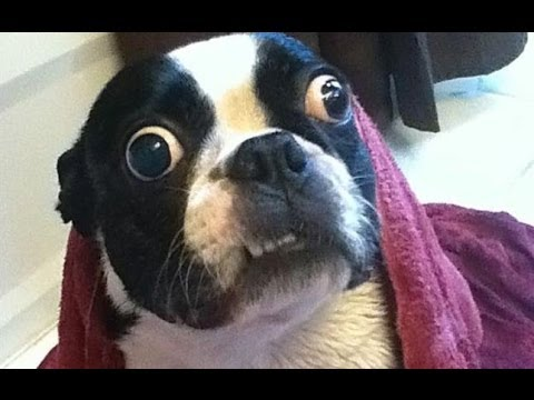 Ultimate Funny Dog Videos Compilation 2013