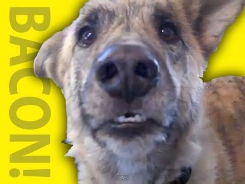 Ultimate Dog Tease