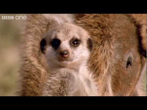 Funny Talking Animals – Walk On The Wild Side – Episode Two Preview – BBC One