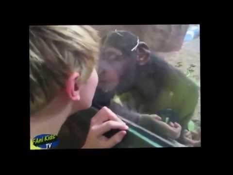 Funny animal fails compilation || Animals attack fails kids at the zoo ||Funny videos 2015