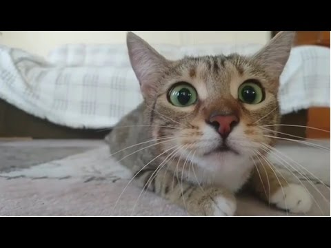 Funny Cats Compilation 2016 – Best Funny Cat Videos Ever